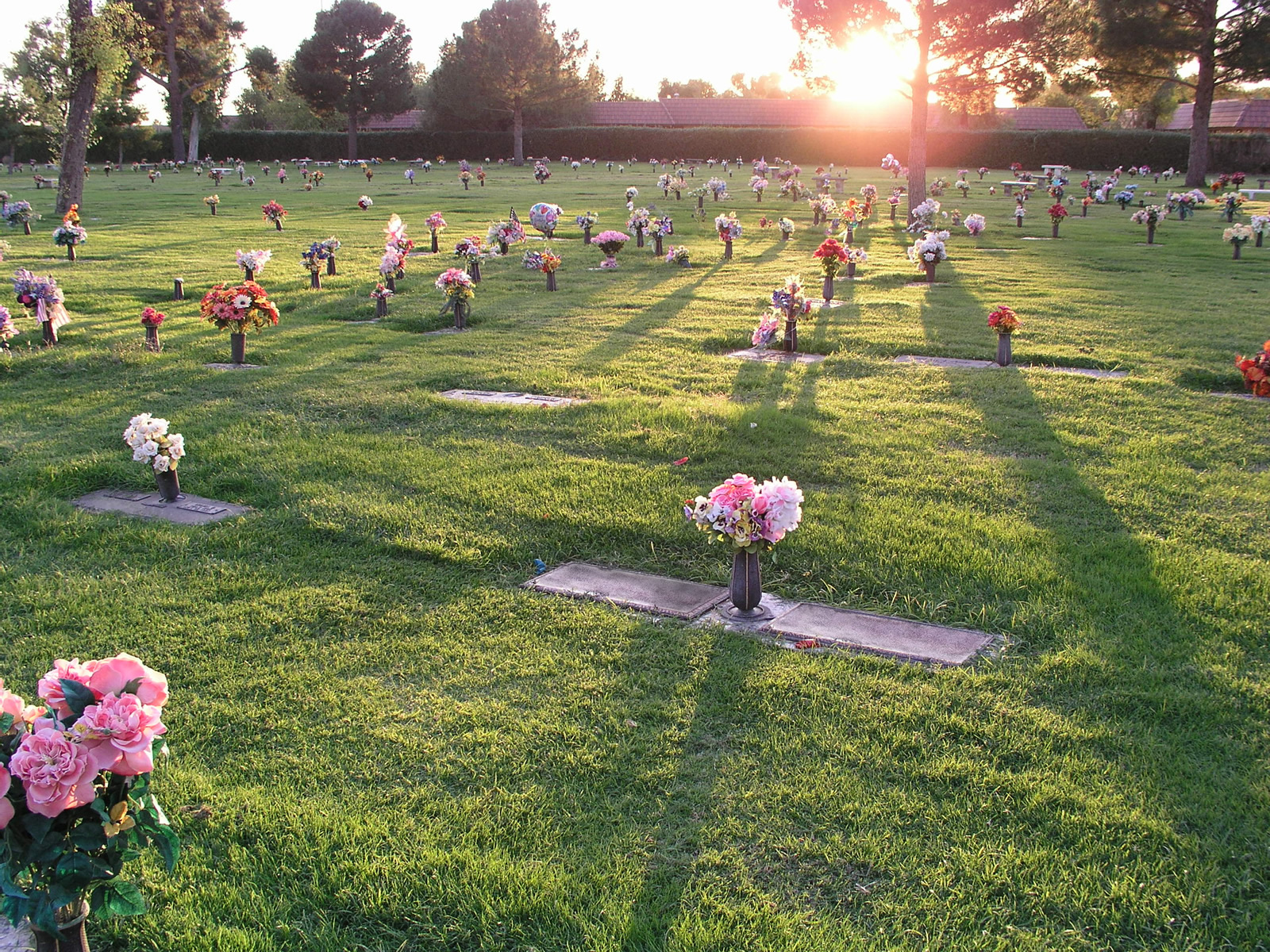 website photo ground level cemetery with sunlight.jpg