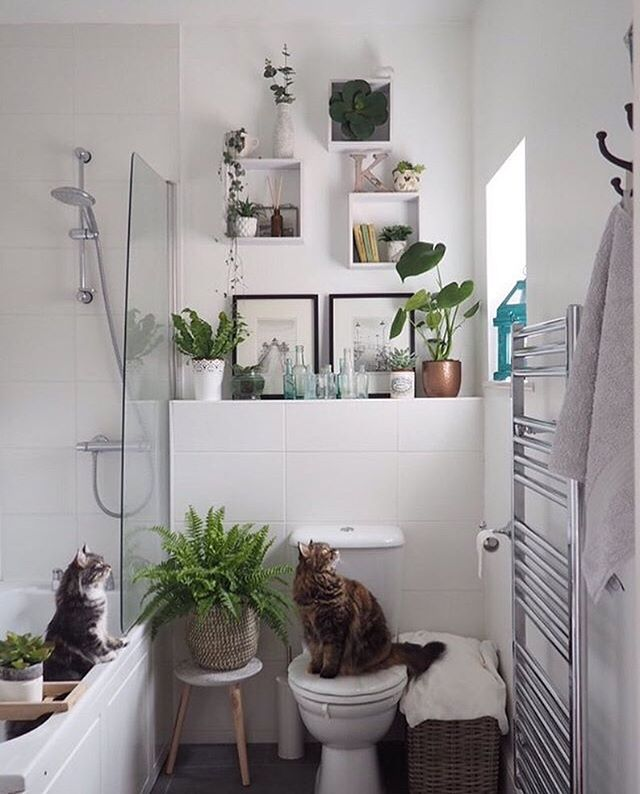 We've all had that housemate (or two) that uses all your shampoo, doesn't replace the empty loo roll and takes forever in the shower 🙄😉😂 ⠀⠀ #bathroom #bathroomdecor #bathroomdesign #bathroomdetails #bathroomsofinstagram #bathroomstyling #bathroominspiration #ensuite #bathroomideas #bathroominterior #catsofinstagram #catsinthebath #houseplantclub #botanicalpickmeup #houseplantcommunity #houseplantsofinstagram #ihavethisthingwithplants #plantsmakemehappy #plantstagram #plantlover #planthoarder #interior4you #pocketofmyhome #myhomevibe #lovelyinterior #interiordetails #interiorlovers #apartmenttherapy #atmine