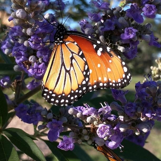 Butterfly04-30-18.jpg