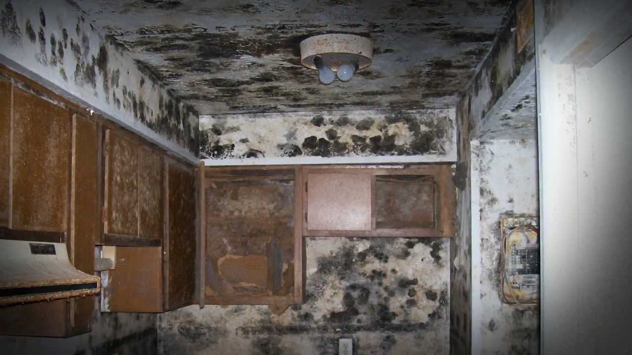 mold inspection services charleston sc