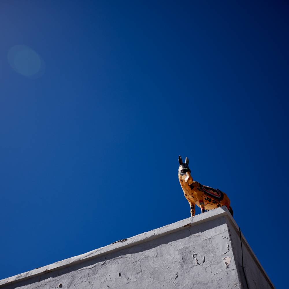 roof burro