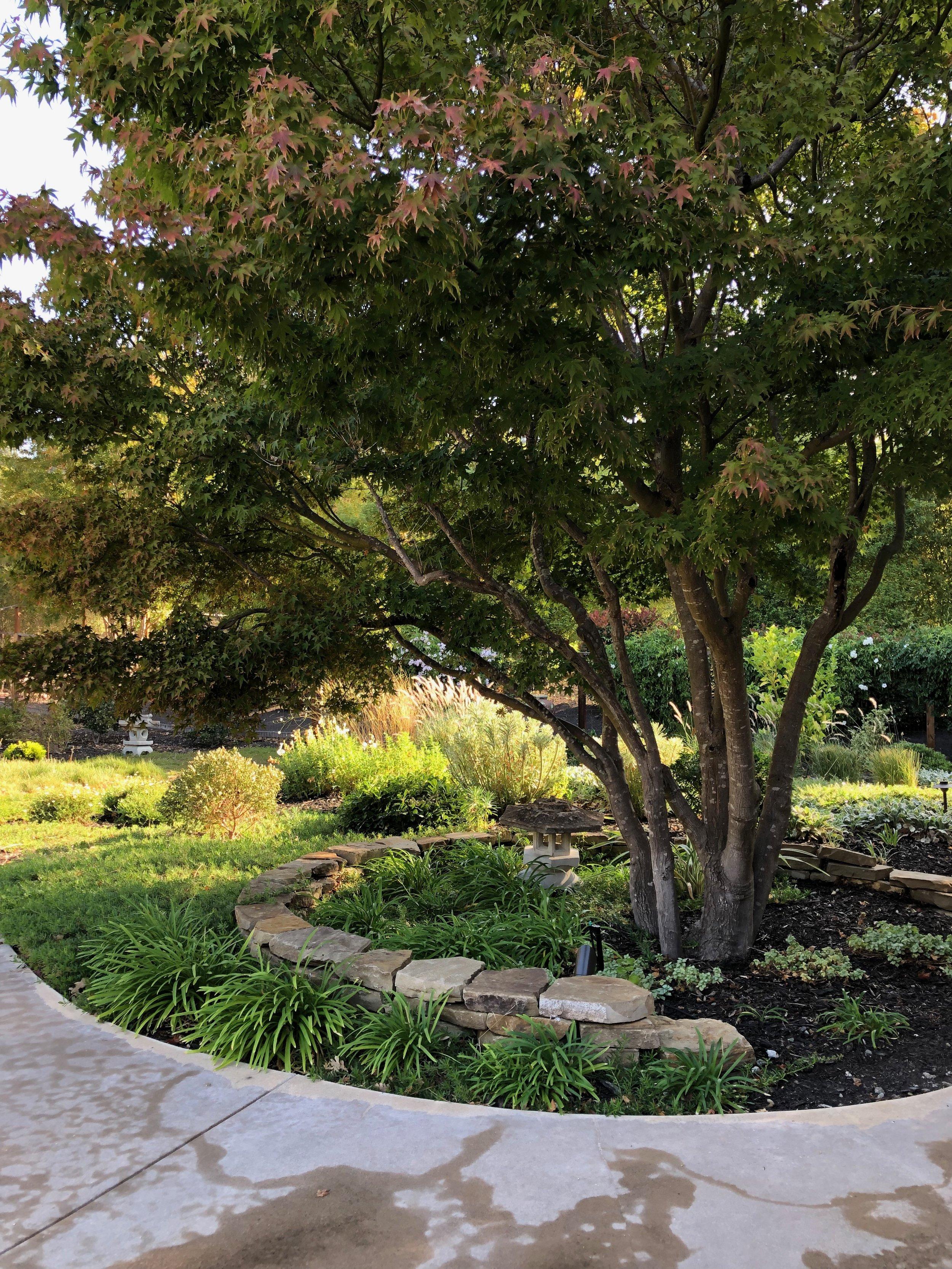 Alamo Meadow Garden.jpeg