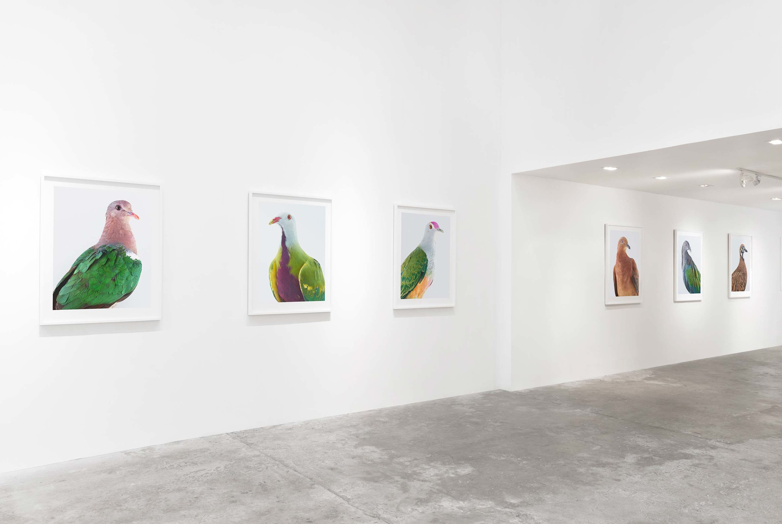 Installation view, Ornithurae, 2017, Olsen Gruin Gallery, New York