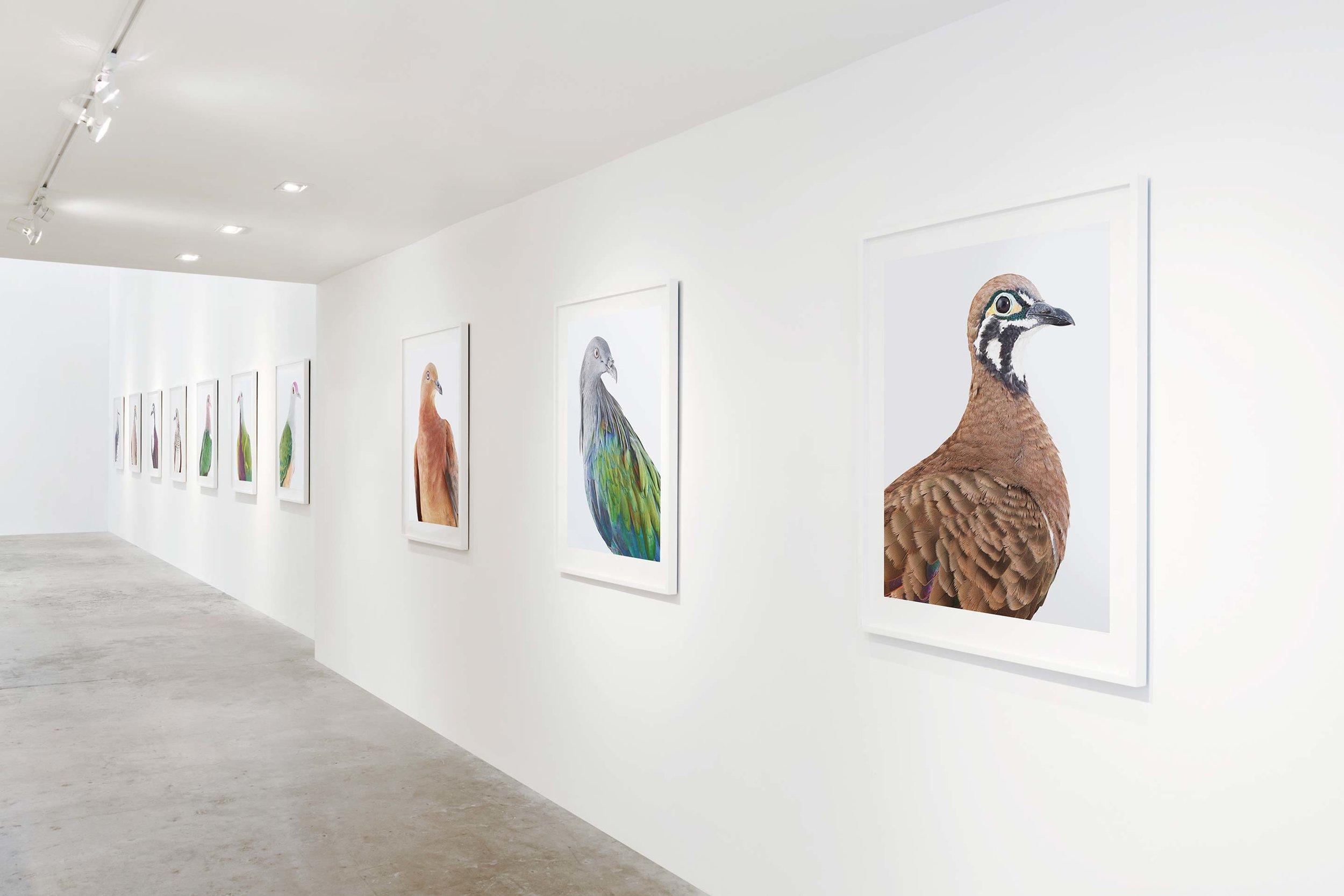 Ornithurae, Olsen Gruin Gallery, New York, 2017