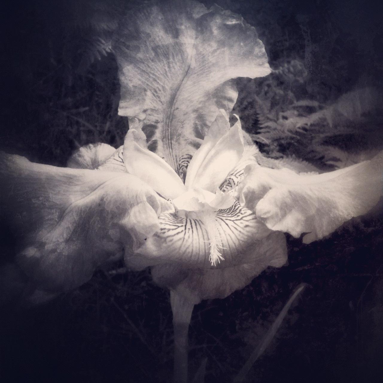 Jen-Kiaba-fine-art-still-life-3107.jpg