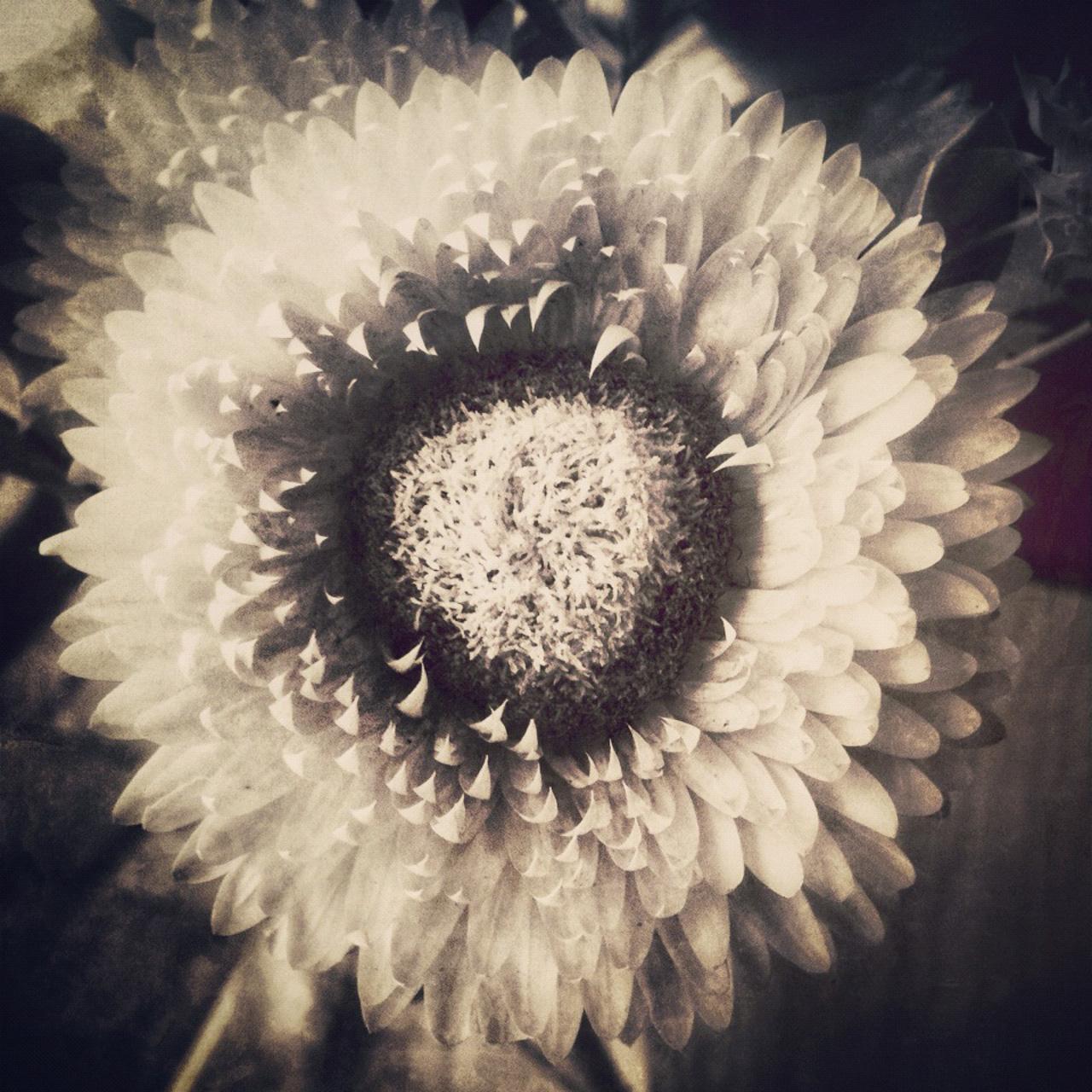 Jen-Kiaba-fine-art-still-life-3115.jpg