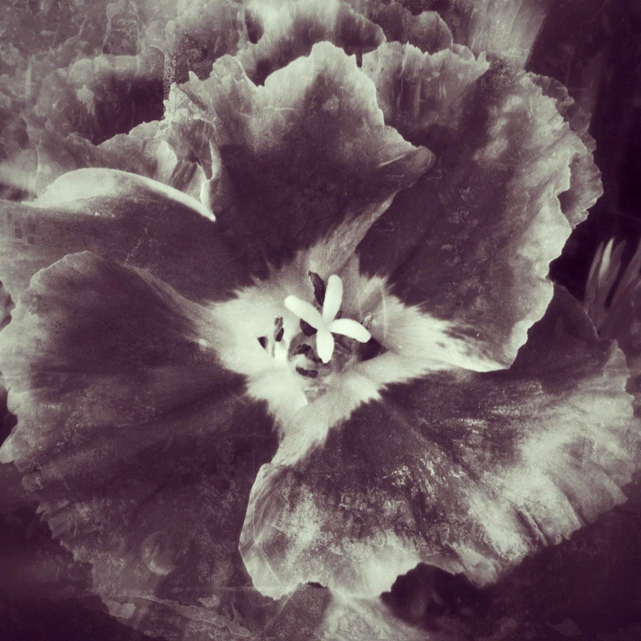 Jen-Kiaba-fine-art-still-life-3118.jpg