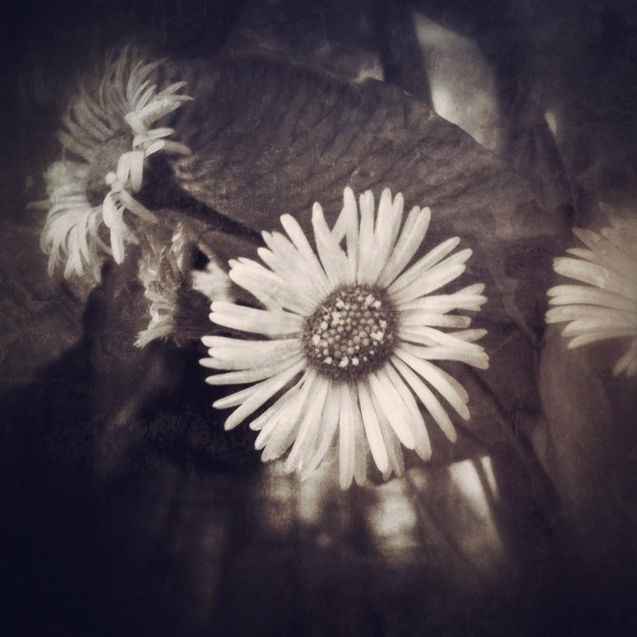 Jen-Kiaba-fine-art-still-life-3128.jpg
