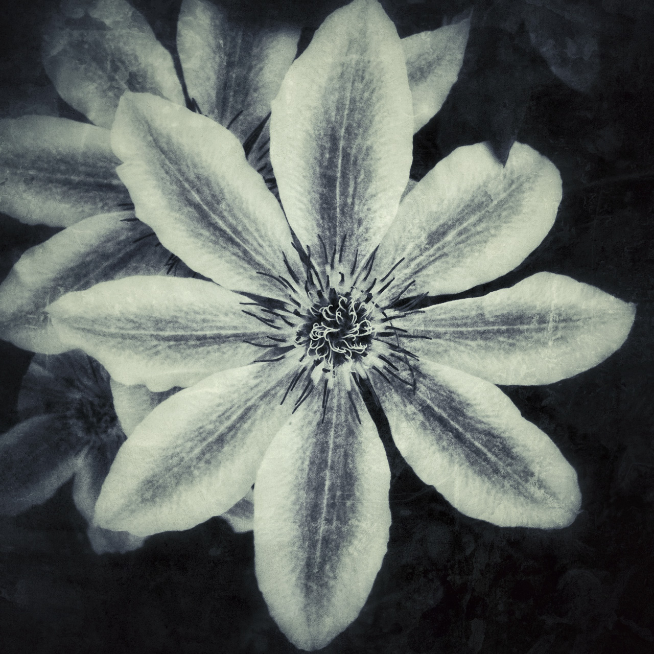 Jen-Kiaba-fine-art-still-life-3142.jpg