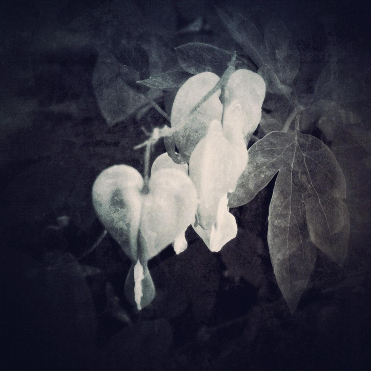 Jen-Kiaba-fine-art-still-life-3158.jpg
