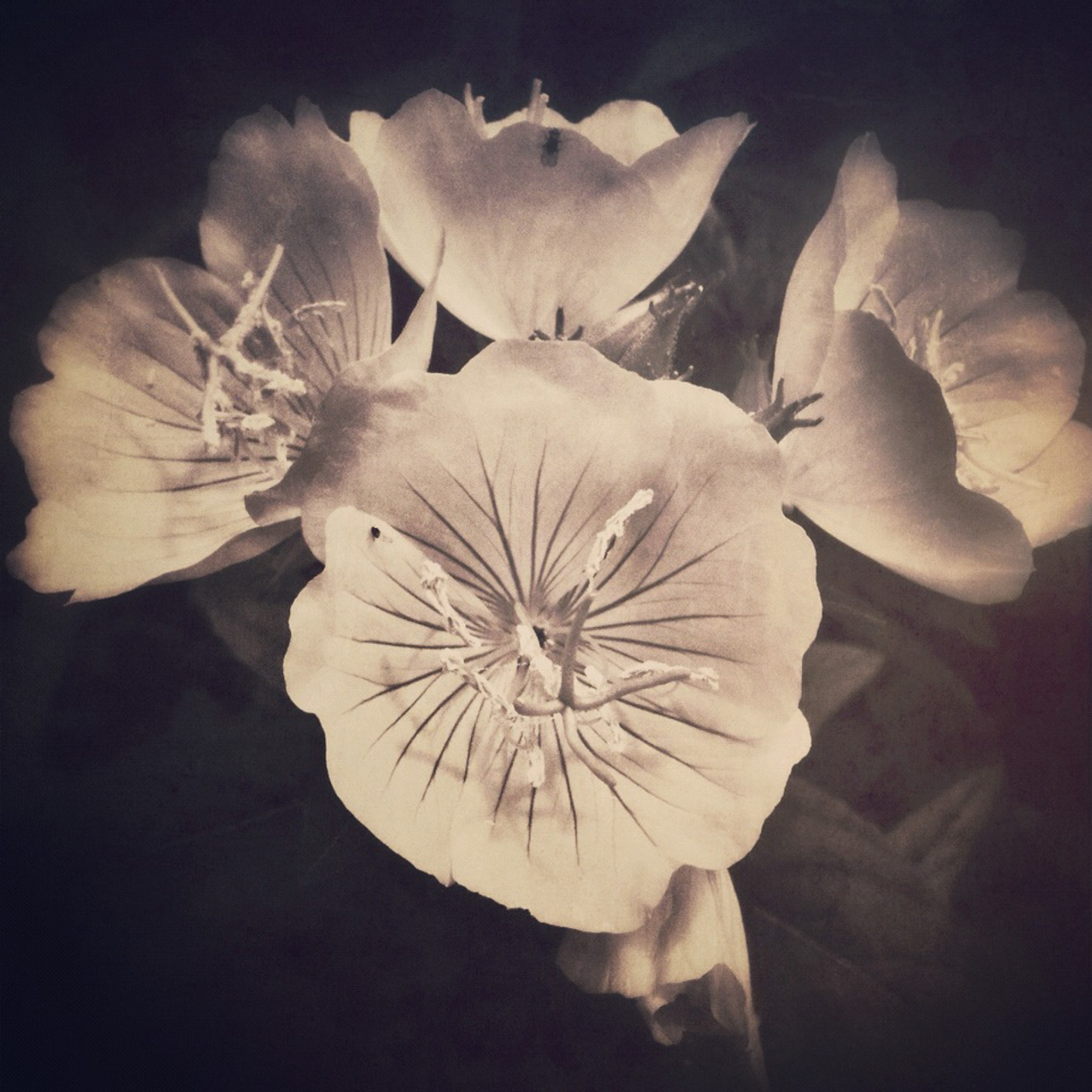 Jen-Kiaba-fine-art-still-life-3240.jpg
