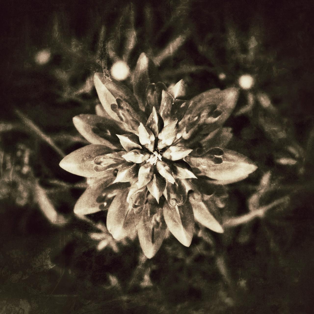 Jen-Kiaba-fine-art-still-life-3250.jpg