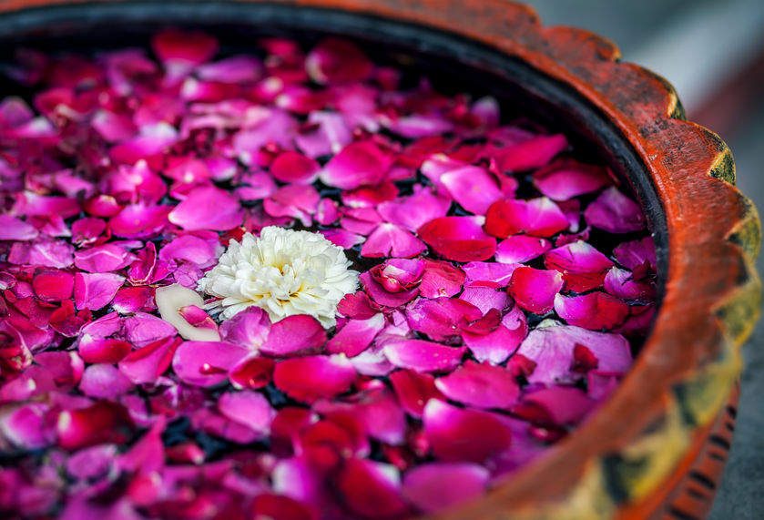 Plant & Essential Oil remedies based on your horoscope - Contact Dhyana for more information