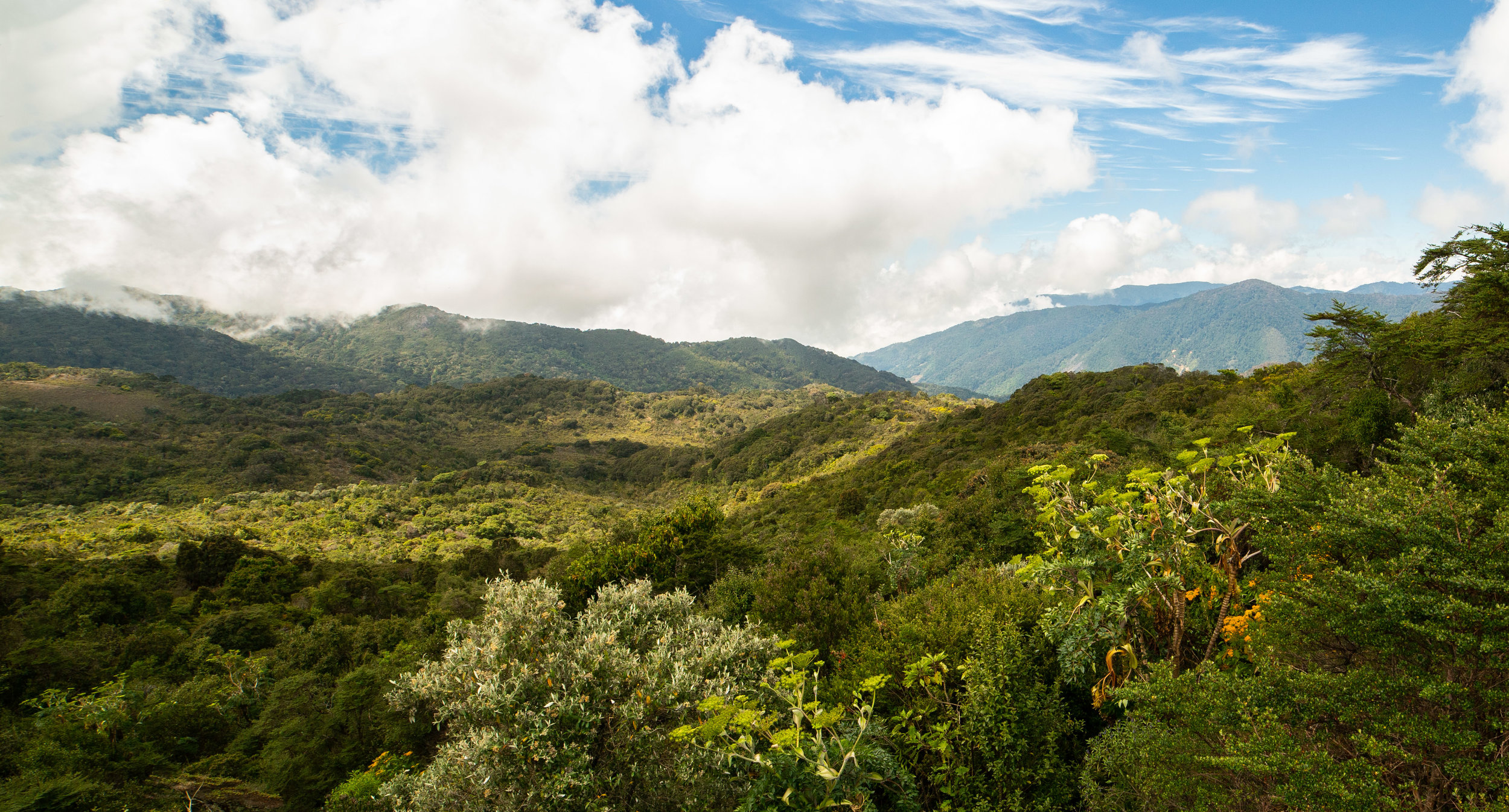 Cloud forests of Los Quetzales National Park