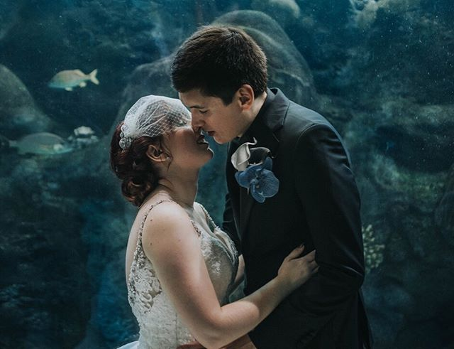 #theshapeofwater vibes coming from this photo I took @floridaaquarium ✨❤️🐟 In reality though, their entire ceremony was based off of #thecorpsebride movie 😍 music & vows alike! . . . . . #offbeatbride #aquariumwedding #underwaterwedding #timburton #tampawedding #tampaweddingphotographer #westcoastwedding #gulfcoastweddingphotographer #blue #holdmecloser #vintage #morileebride #blusherveil
