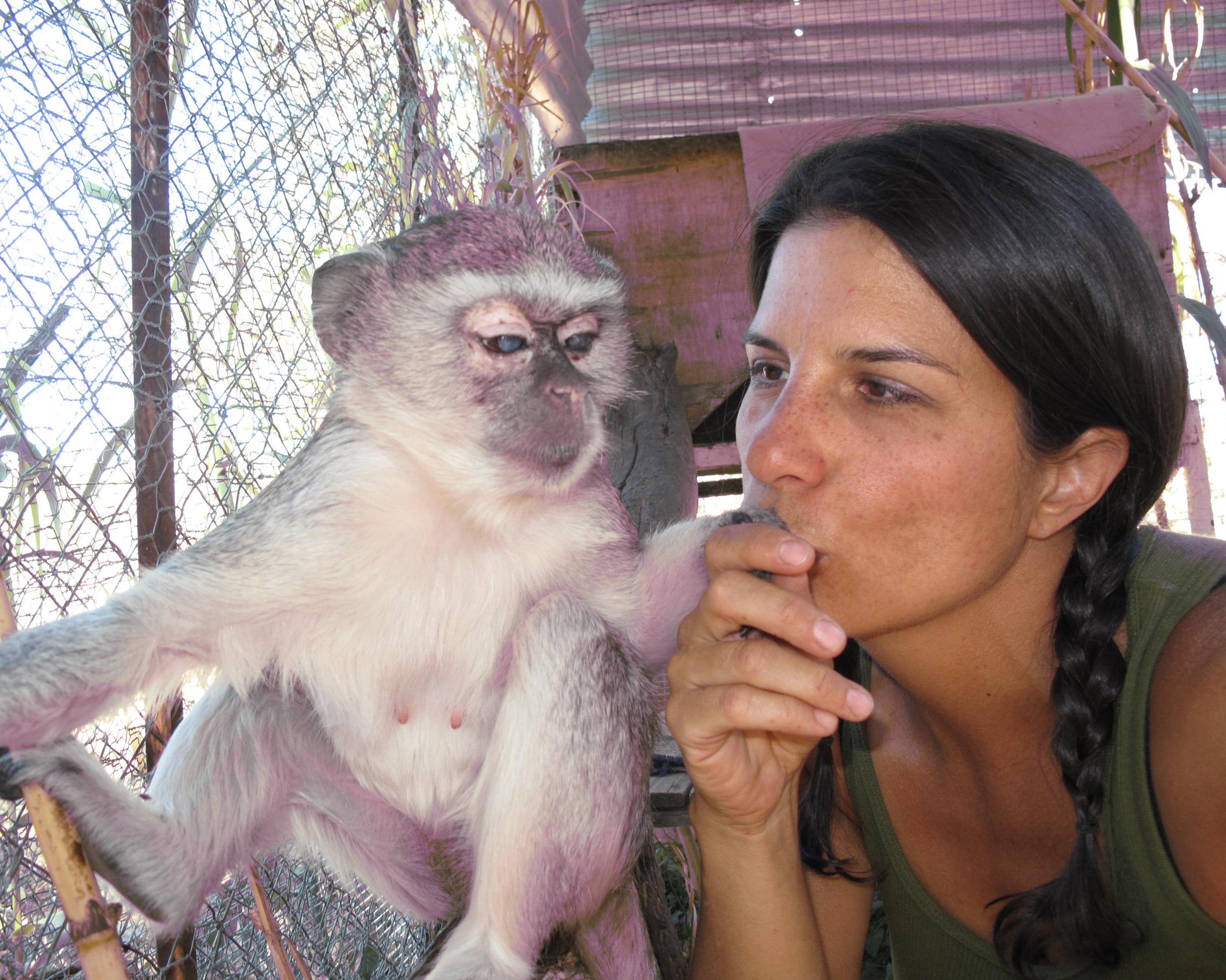 Audrey the blind vervet monkey.jpg
