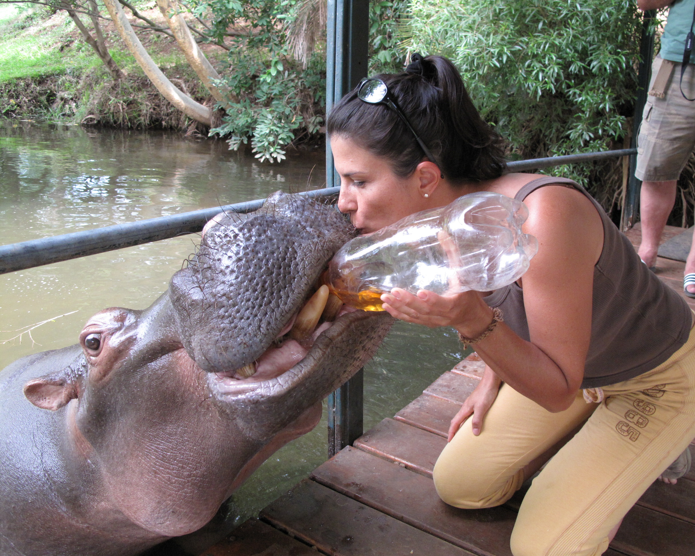 kissing Jessica the hippo.jpg