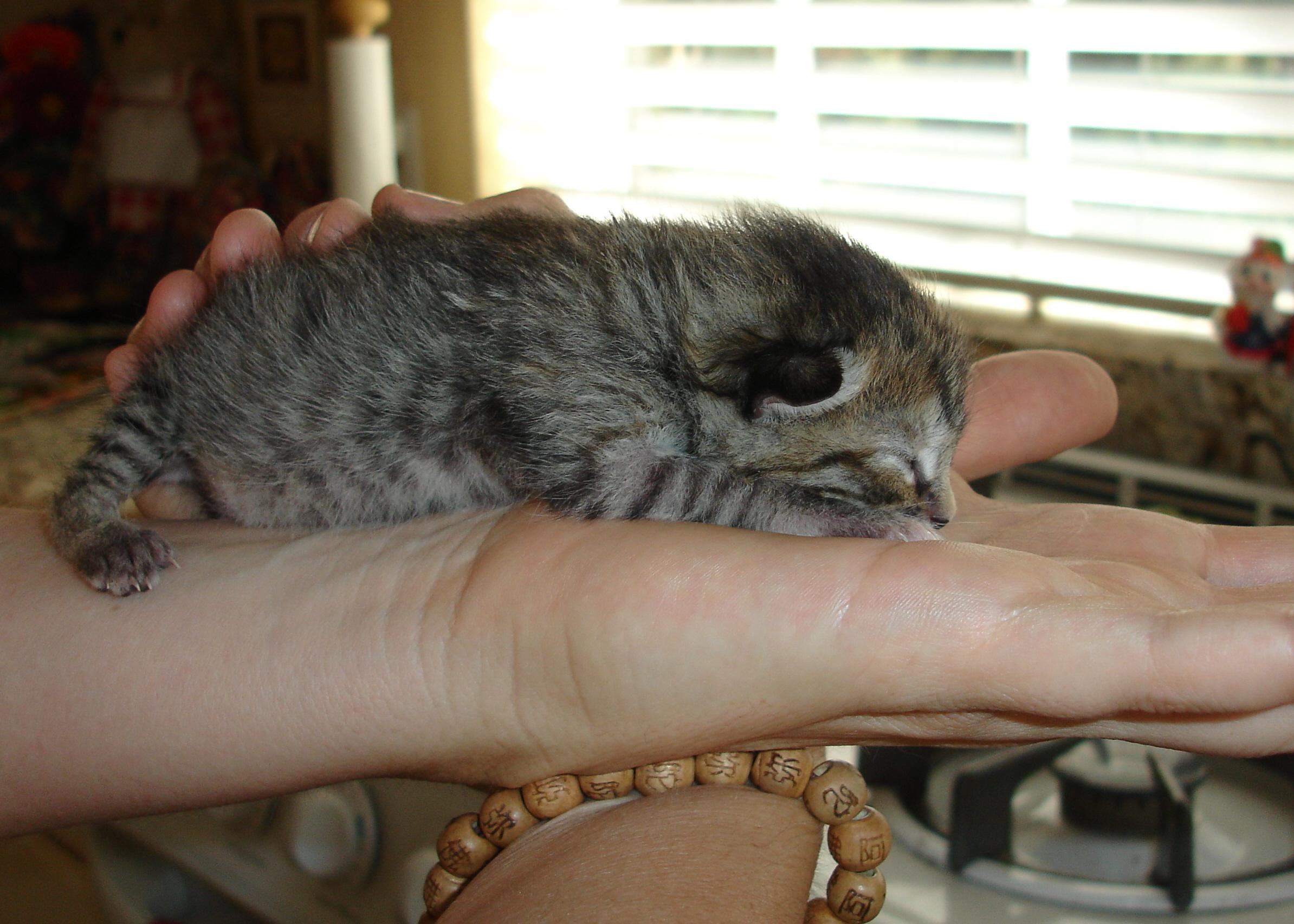 hanna in Katt's hand.jpg