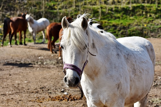 horse riding & Pony Trekking - Head to the stables and explore north Wales on horseback! Llys Tanwg is within driving distance of multiple stables. The closest being Bwlchgwyn Farm. Other stables nearby are Gwydyr Stables and Snowdonia Riding Stables.