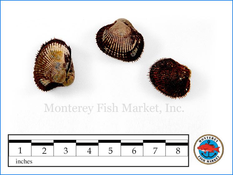 Monterey Fish Market Seafood Index photograph of Blood Clams,  Anadara tuberculosa   / ( Patas de Mula, Concha Negra)
