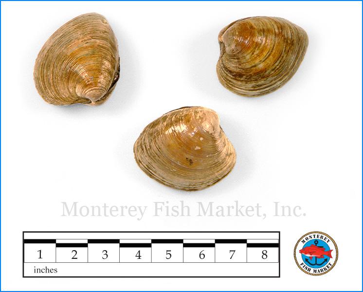 Monterey Fish Market Seafood Index photograph of Cherrystone Clams,  Mercenaria mercenaria