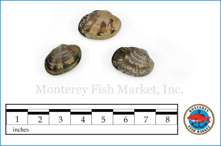 Monterey Fish Market Seafood Index photograph of Manila Clam,  Venerupis philippinarum