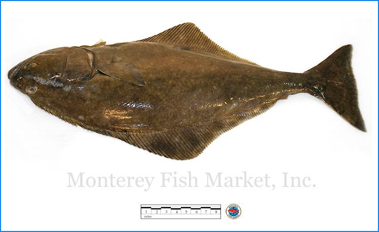 Monterey Fish Market Seafood Index photograph of Pacific Halibut,  Hippoglossus stenolepis  (Alaskan Halibut)
