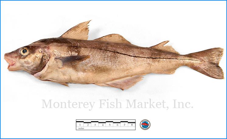 Monterey Fish Market Seafood Index photograph of Haddock,  Melangrammus aeglefinus
