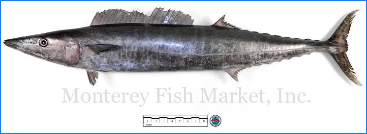 Monterey Fish Market Seafood Index photograph of Wahoo,  Acanthocybium solandri  (Hawaiian Ono)