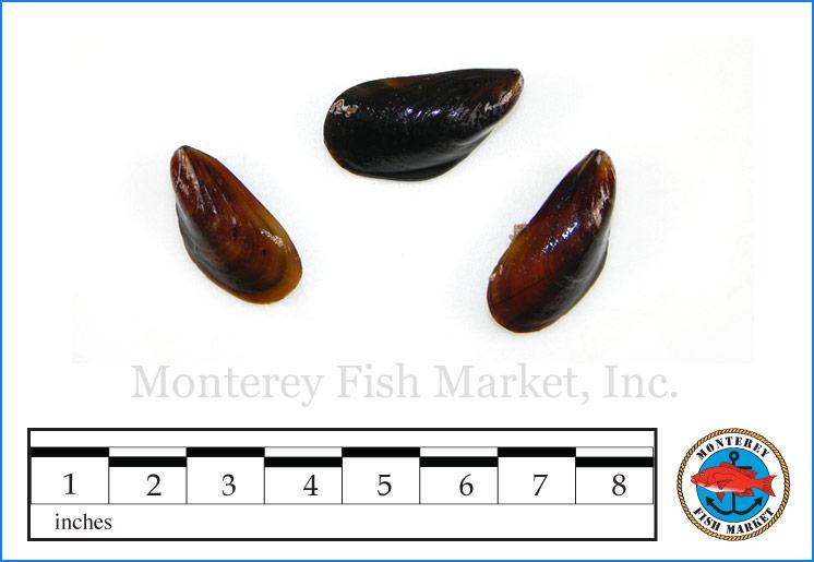 Monterey Fish Market Seafood Index photograph of Mediterranean Mussels,  Mytilus galloprovincialis
