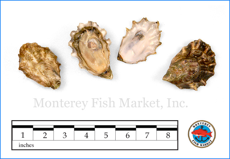 Monterey Fish Market Seafood Index photograph of Pacific Oyster,  Crassostrea gigas