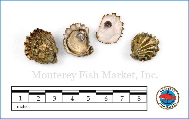 Monterey Fish Market Seafood Index photograph of Kumamoto Oyster,  Crassostrea sikamea
