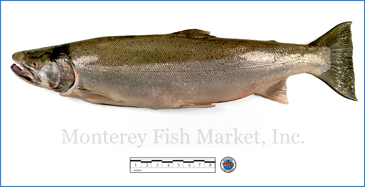 Monterey Fish Market Seafood Index photograph of Steelhead Trout,  Oncorhynchus mykiss