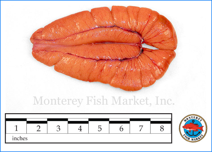 Monterey Fish Market Seafood Index photograph of Shad Roe,  Alosa sapidissima