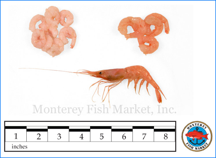Monterey Fish Market Seafood Index photograph of Bay Shrimp,  Pandalus jordeni