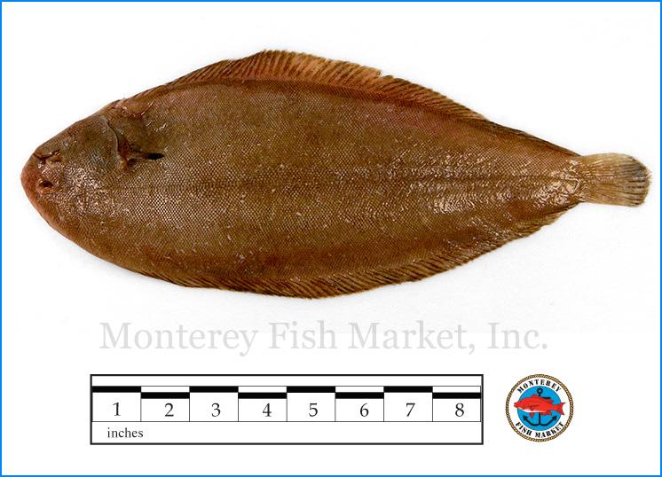 Monterey Fish Market Seafood Index photograph of European Dover Sole,  Solea solea