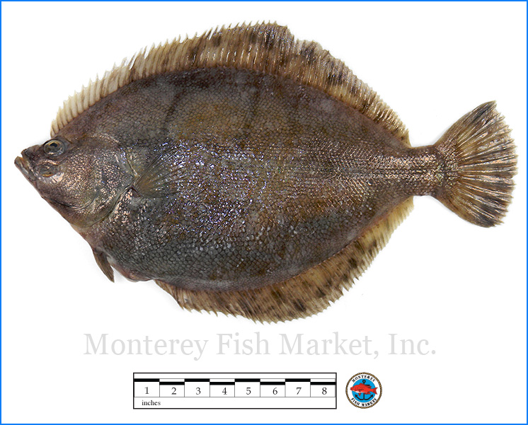 Monterey Fish Market Seafood Index photograph of Alaskan Rock Sole -  Lepidopsetta bilineata