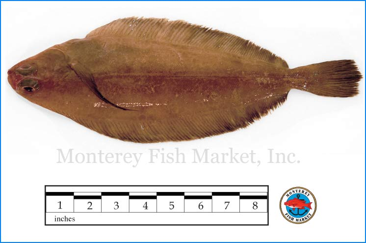 Monterey Fish Market Seafood Index photograph of Rex Sole -  Glyptocephalus zachirus