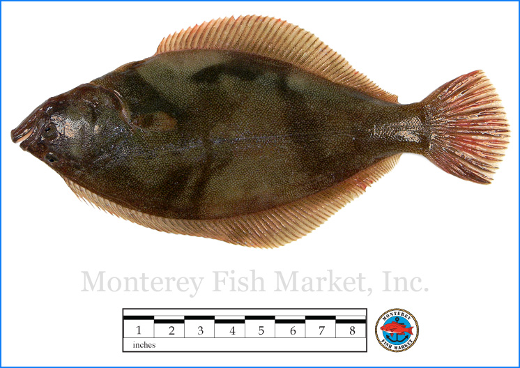 Monterey Fish Market Seafood Index photograph of Sand Sole -  Platichthys melanostictus