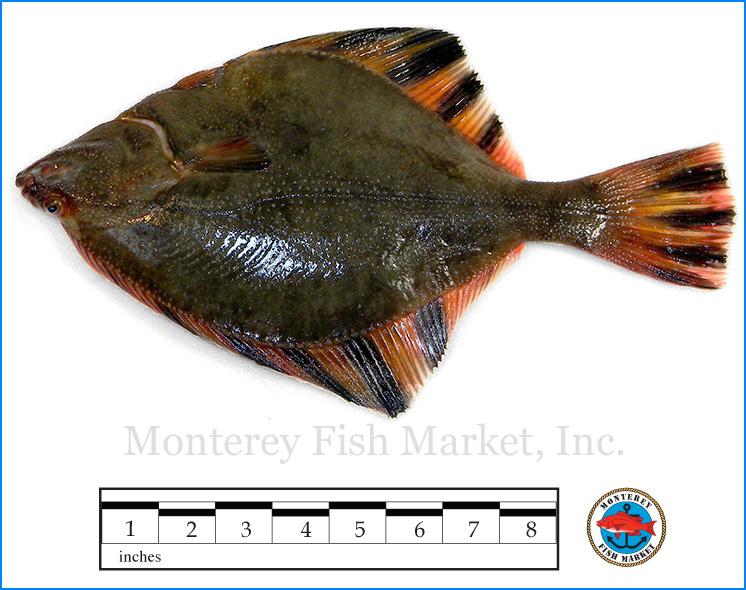 Monterey Fish Market Seafood Index photograph of Starry Flounder -  Platichthys stellatus