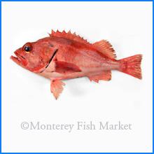 Blackgill Rockfish