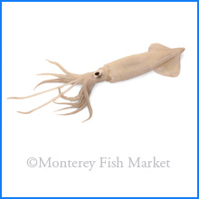 Market Squid