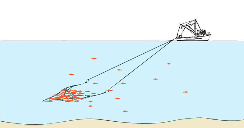 Trawling or Dragging is the method of fishing responsible for the greatest percentage of fishery landings. Trawling is simply described as towing a net through water.  Mid-water trawlers tow a funnel-shaped net through the water column between the surface and the bottom, targeting mid-level pelagic fish, such as true cod and pollock, resulting in less impact on fishery habitat and less bycatch.