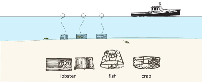 Pots or traps are often designed specifically for one type of fish or shellfish. Traps and pots are generally baited and equipped with one or more funnel openings, and they are weighted to rest on the bottom. Pots or traps can be fished singularly or in small groups, and each has a buoy at the surface to mark location.