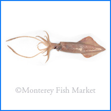 Long Fin Squid