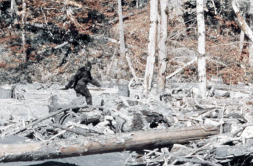 The iconic photograph of Bigfoot taken in 1967.