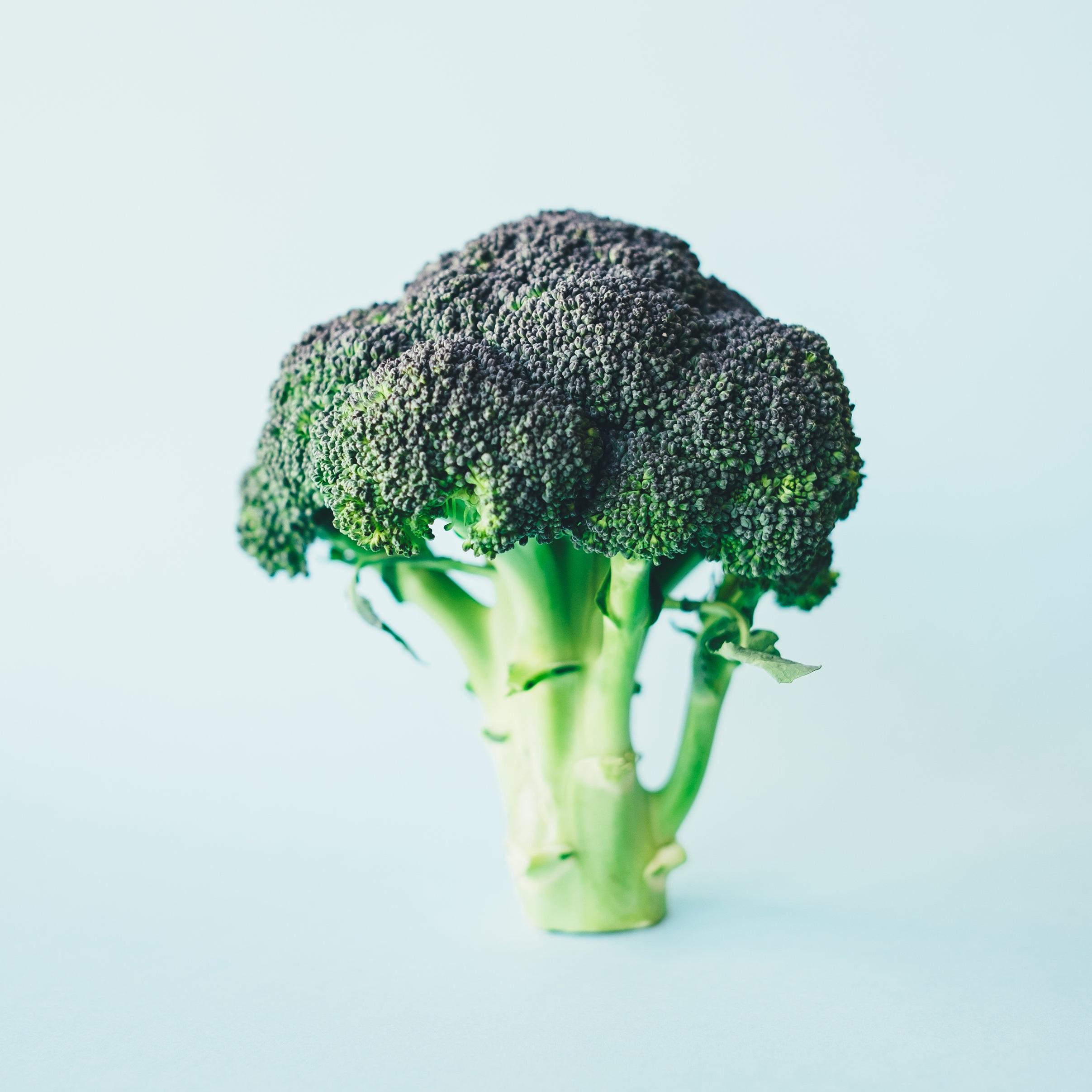 cabbage03-makingitrealinc