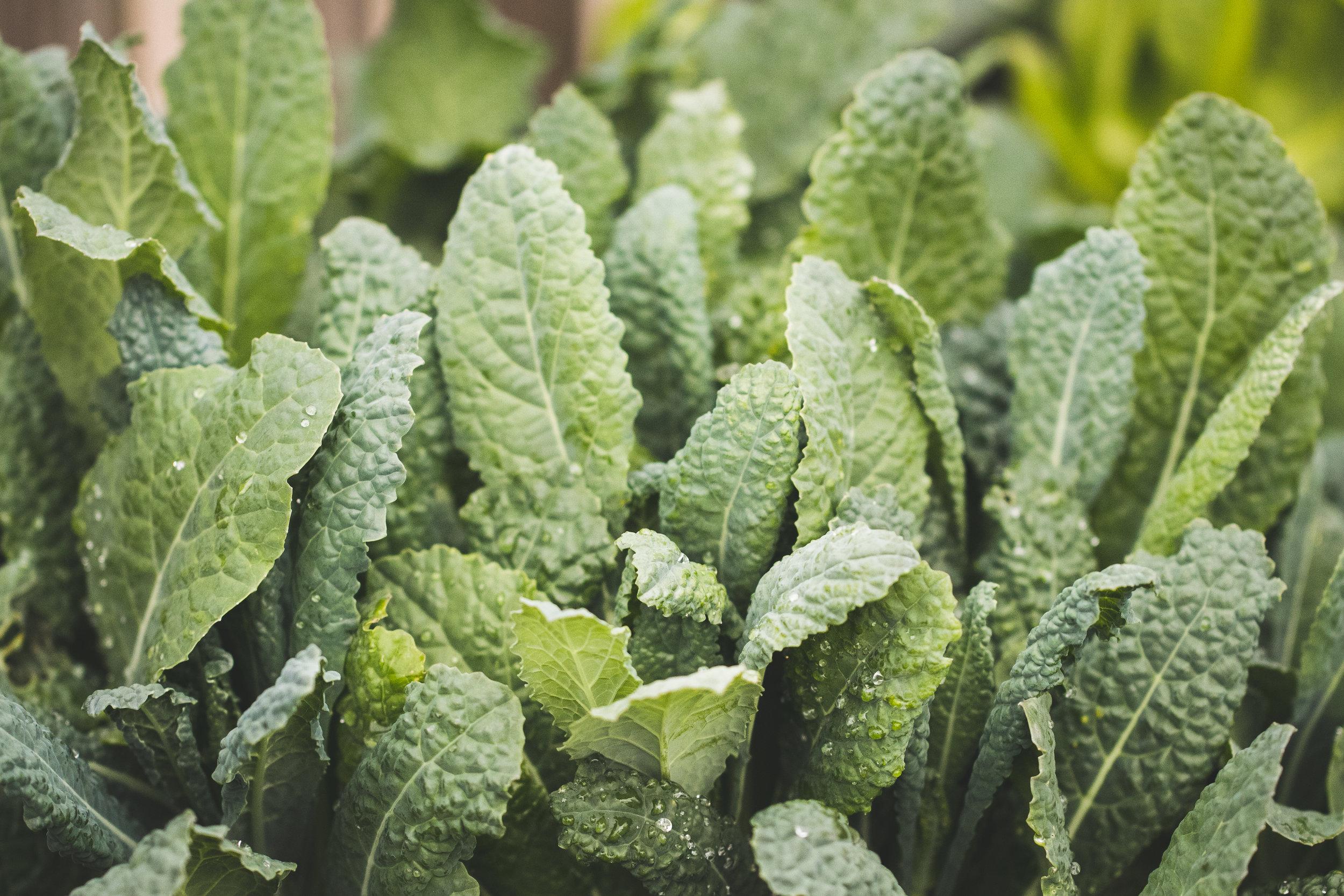 cabbage05-makingitralinc