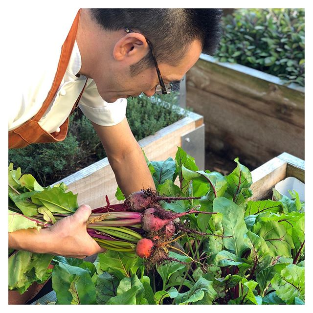 Out with @chef_keisuzaki today harvesting the first beetroot from the Fabric garden for our new gnocchi dish. Simple pleasures!  #fabriccafebistro #freshisbest #restaurantgarden #aucklandeats #aucklandrestaurant #growyourown