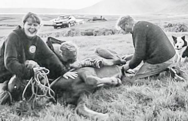 Við geldingu í Hrunamannahreppi (mynd úr Litla Bergþór)
